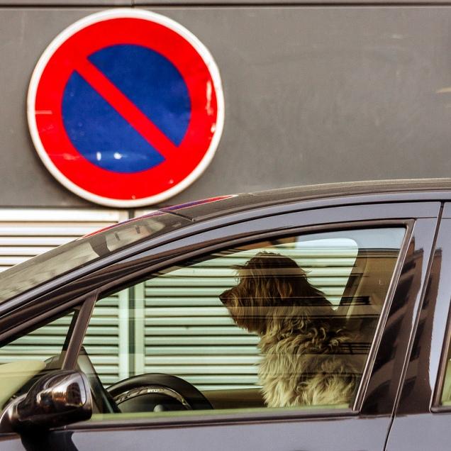 zabranjeno za pse